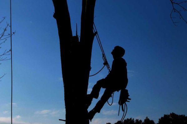 Tree Pruning – The Importance of Knowing the Fundamentals